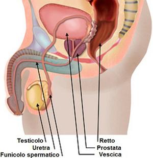 Consumo di latticini, cibi ricchi di calcio e prostata