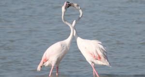 San Valentino: gli animali lo festeggiano così