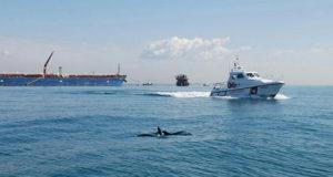 Firmato accordo per la tutela dei Delfini Capitolini